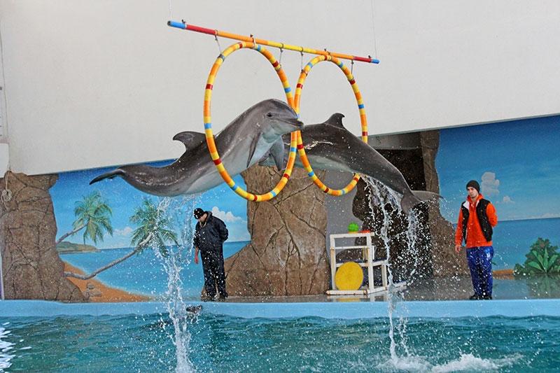 дельфинарий лазаревское фото только оформлении жилой
