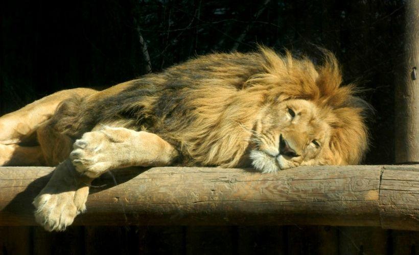 Отправиться в гости к жителям Ростовского зоопарка