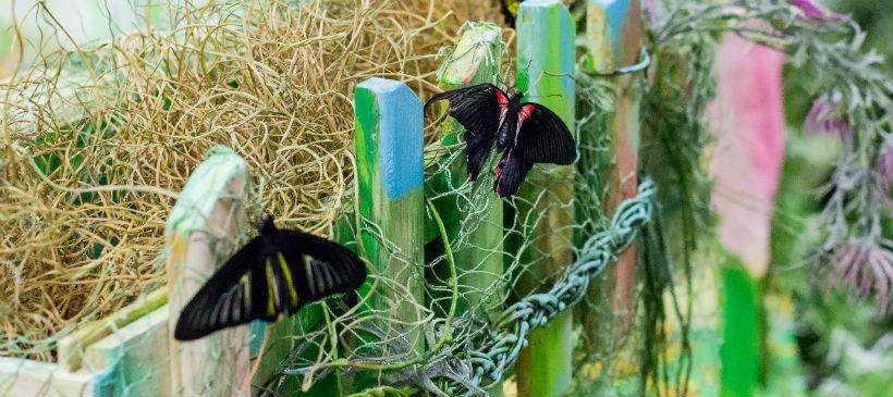 Контактный зоопарк и парк тропических бабочек