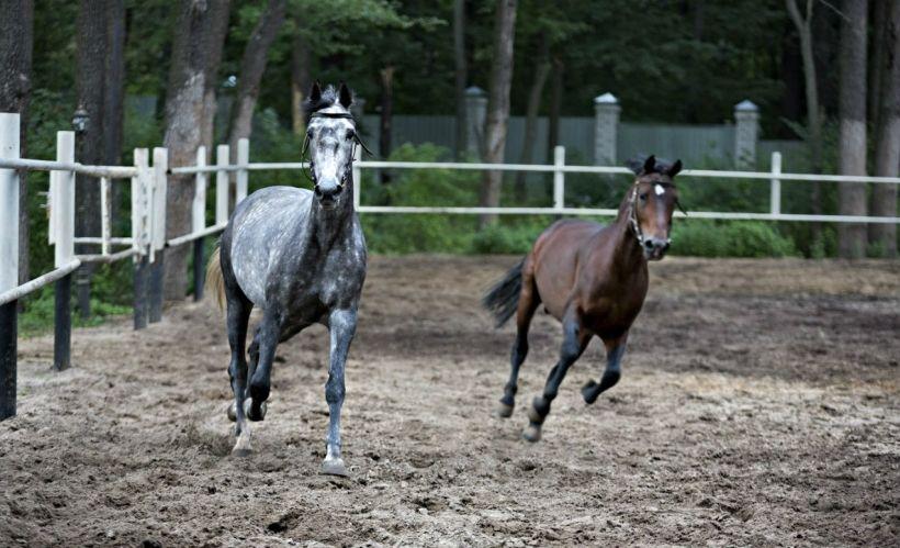 Катание на лошадях в Конноспортивном клубе отеля «Яр»