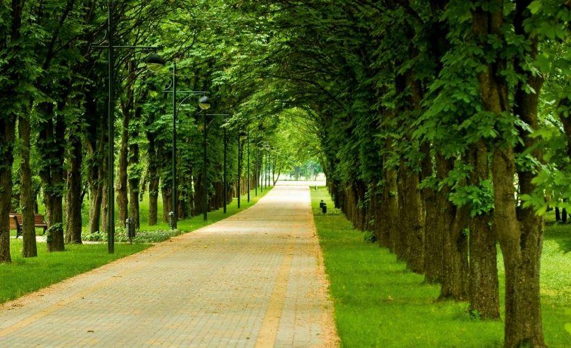 Ботанический сад им. И.С. Косенко