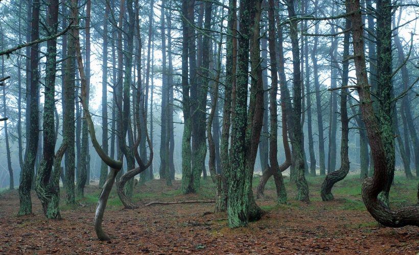 «Танцующий лес»