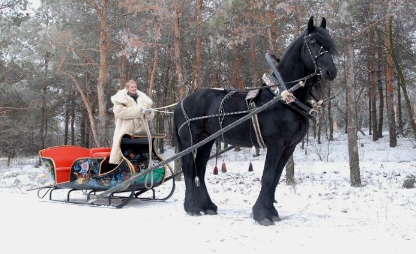 Катание на лошадях на базе отдыха «Сосновый бор»