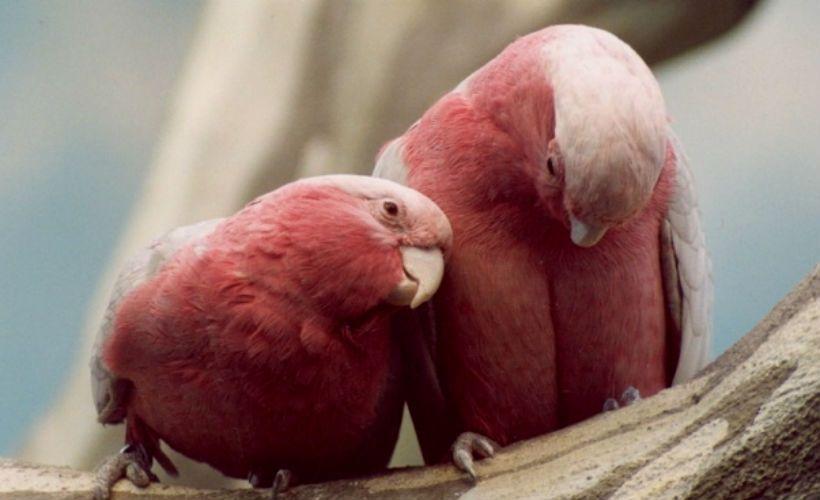 Сходить в Дом птиц