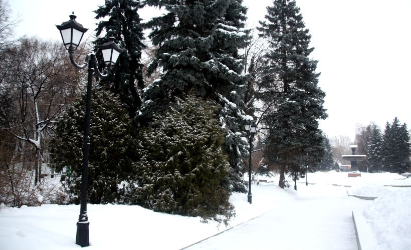 Дендрологический парк-выставка