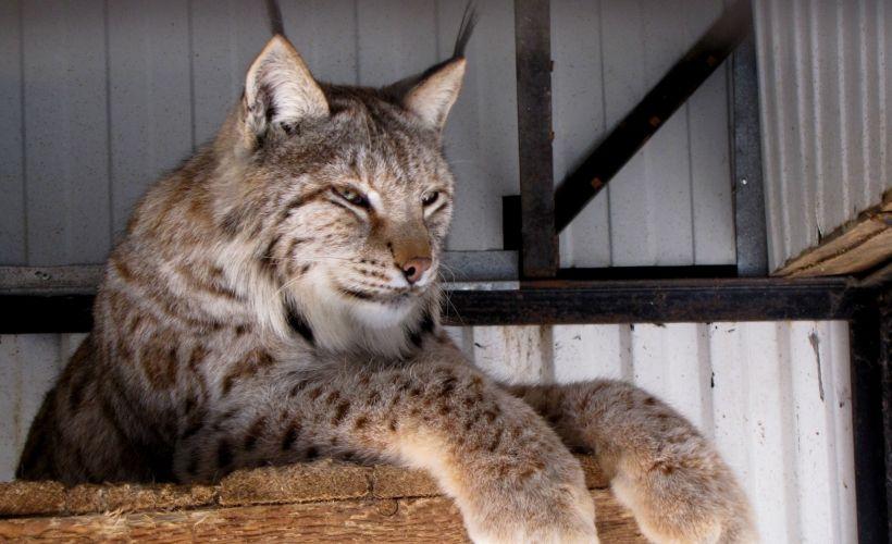 Самарский Зоологический Парк