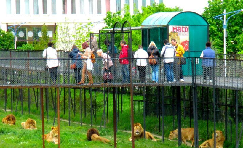 Парк львов «Тайган» в Белогорске