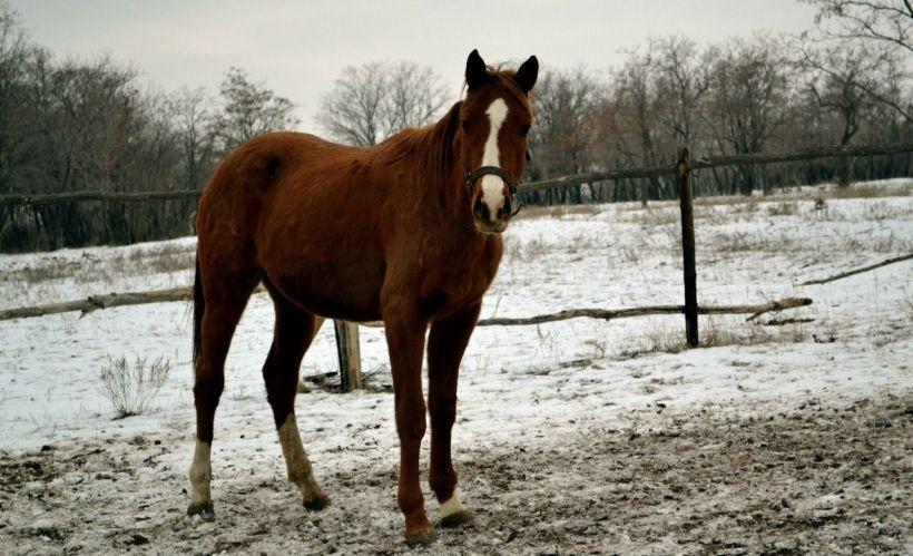 Любительский конный клуб «Конный ген»