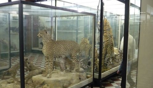 Зоологический музей при кафедре Зоологии