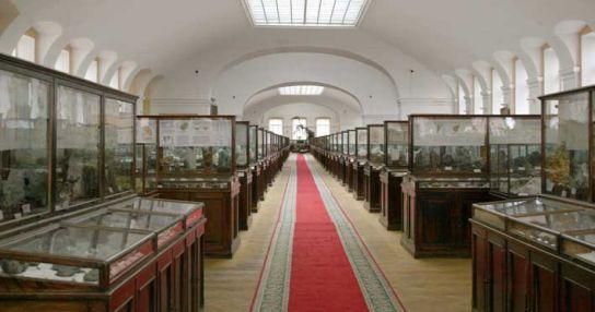 Геологоразведочный музей им. академика Ф.Н. Чернышева
