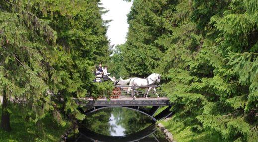 Царское село. Катания на лошадях
