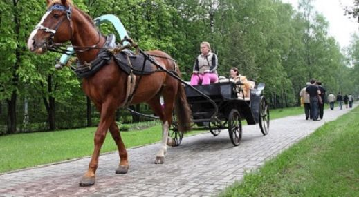 Конные прогулки в Измайловском парке