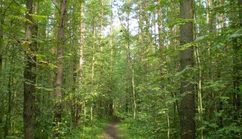 Новоорловский лесопарк