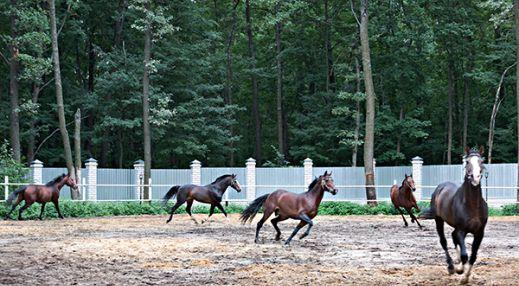 Яр. Катание на лошадях