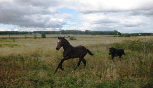 Добрая лошадка