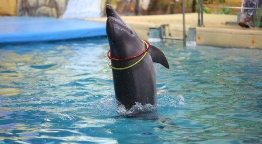 Ярославский дельфинарий