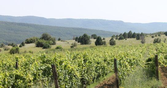UPPA Winery