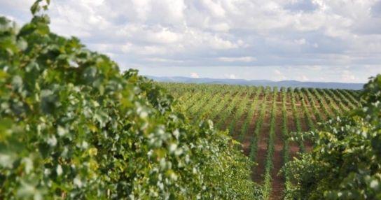 Винодельческая Компания Сатера